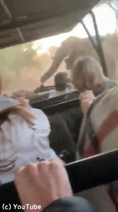 観光客を乗せた車に…ゾウが突進してきた!02