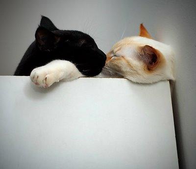 愛し合い猫13
