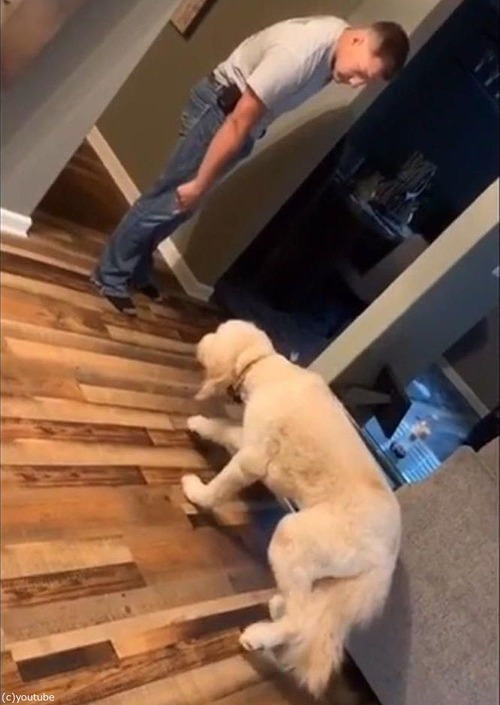 叱られた犬、スローモーションになる01