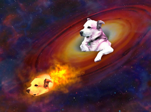 穴の中の犬16