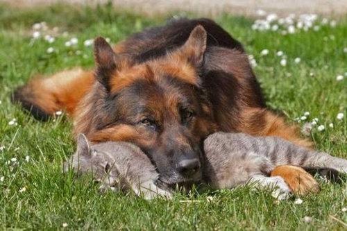 犬と猫がギュッ04
