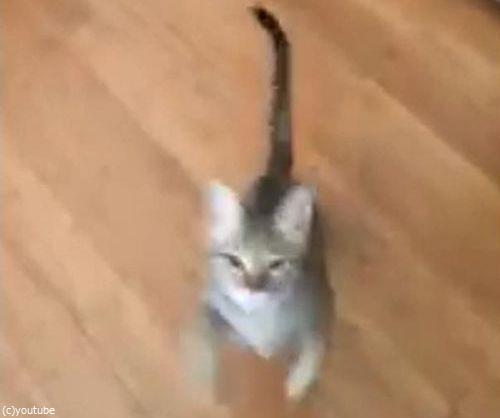 「うちの猫は…私が歌うと飛びついてくる」02