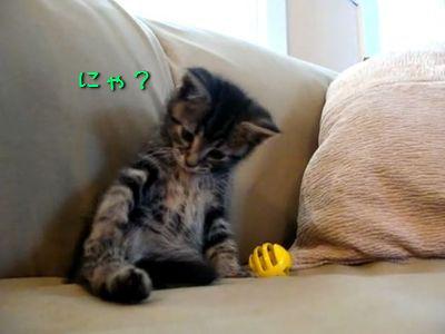 災難な子猫