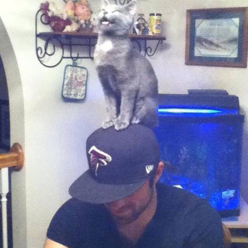 猫は素晴らしい16