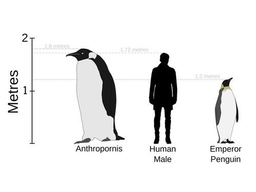 フロリダの巨大ペンギン