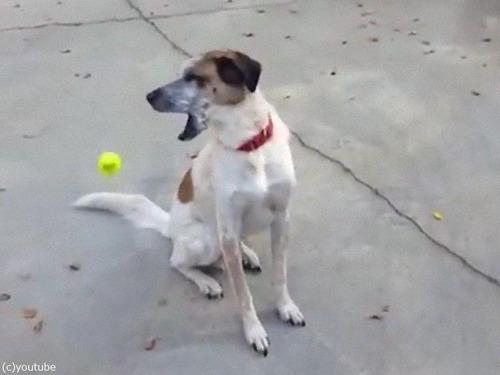 「うちの犬とボール」04