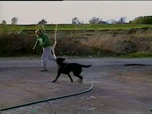 ホースと犬03