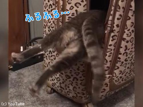 スーツケースに入ろうと思ったら失敗00