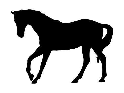 馬には2タイプある00