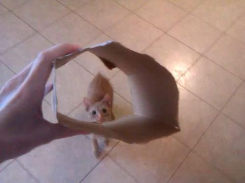 猫と箱01