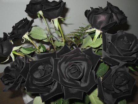 黒バラ05