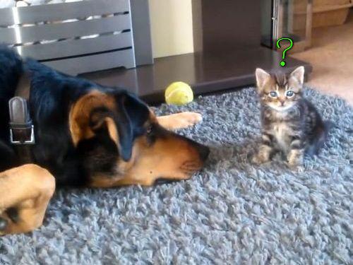子猫と遊びたい犬…でも大きさが違い過ぎて00