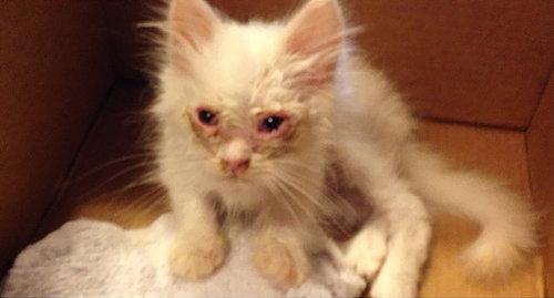 保護した子猫が、すばらしい毛並だった01