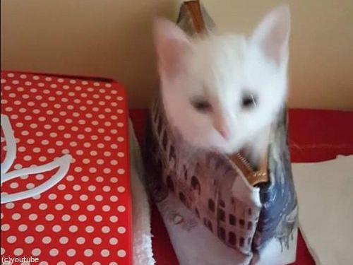 子猫の超高速「いないいないばあ」08
