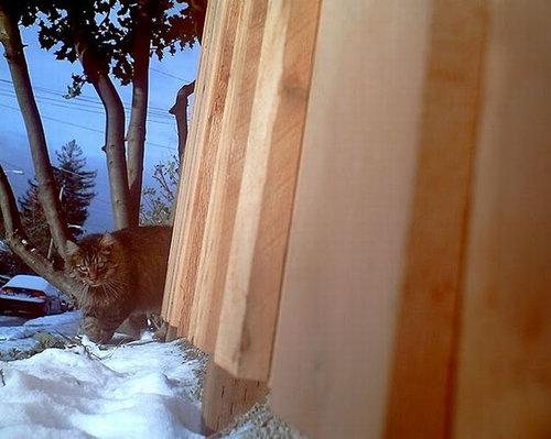 猫の視点28