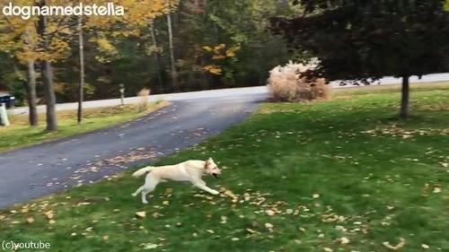 走ってた犬が消えた02