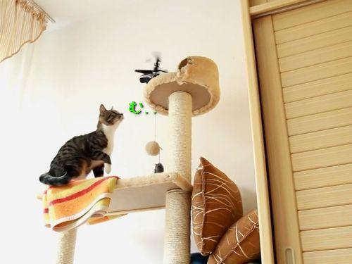 おびえる猫たち00