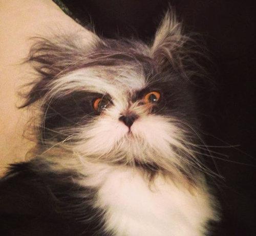 威厳ある猫03