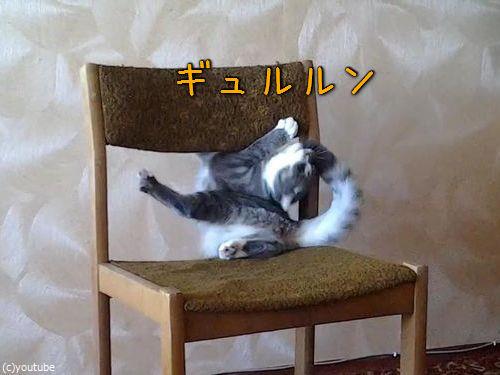 猫がイスでアクロバティック00