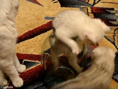 ビンの中の子猫07