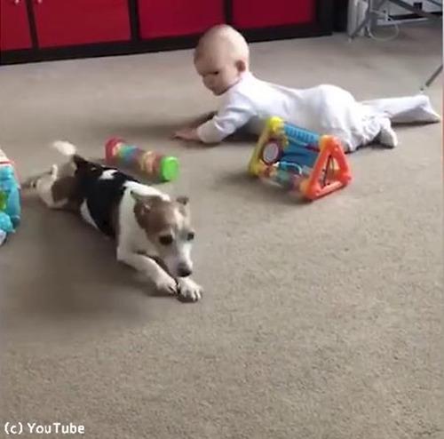 赤ちゃんにハイハイを教える犬02