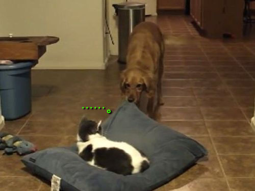 犬と猫のクッション争い00