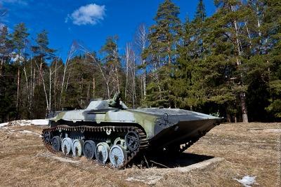 ロシアの森10