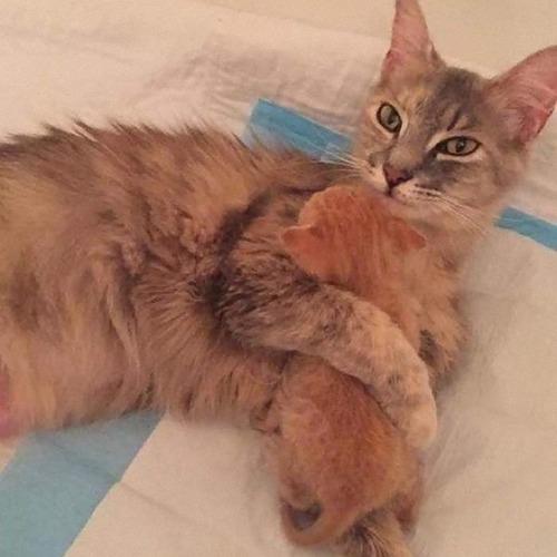 子を亡くした母猫と親を亡くした子猫05