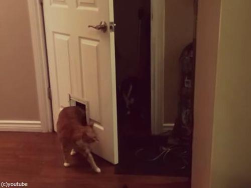 猫「なんで? なぜなんだよ!」04