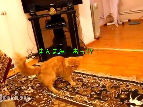 マリオジャンプする猫