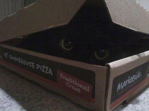 ピザ猫23