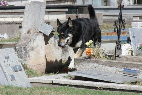 忠犬キャピタン03