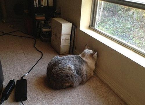 ペットが壁に頭を向けてる時に疑うべき病気02