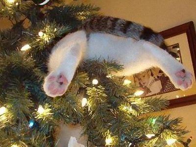 クリスマスの変な写真00
