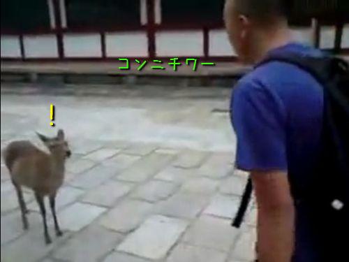 礼儀正しい鹿00