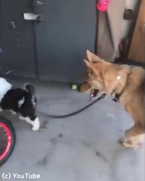 子犬の散歩に付き合う犬04