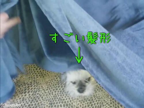 静電気犬01