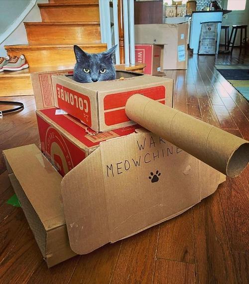 ダンボール猫戦車04