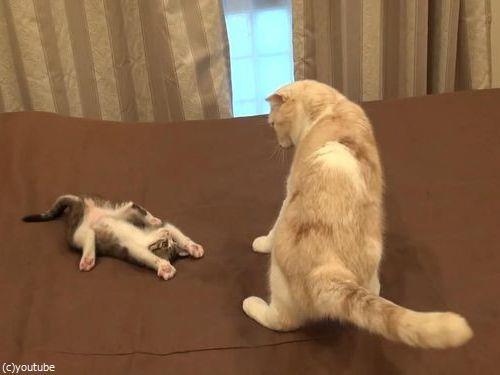 怒られた子猫の謎ポーズ04