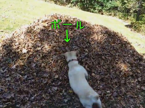 犬と枯葉00
