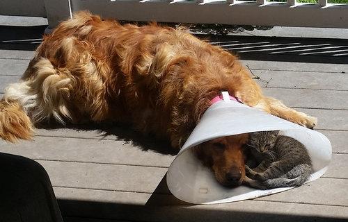 エリザベスカラーの犬と猫01