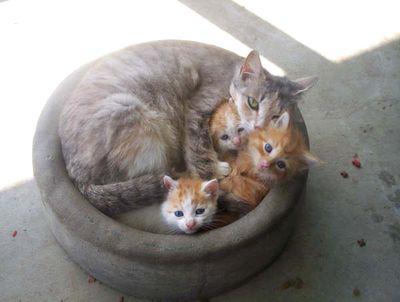 猫が、猫がはみ出てる…03