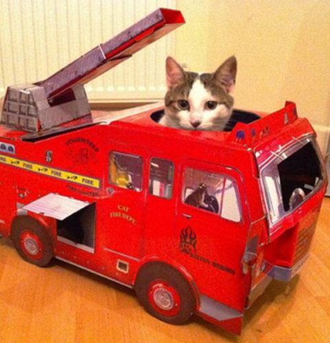 猫と乗り物06