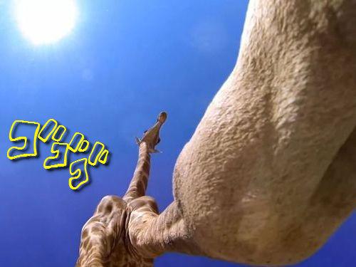 キリンを真下から撮影00