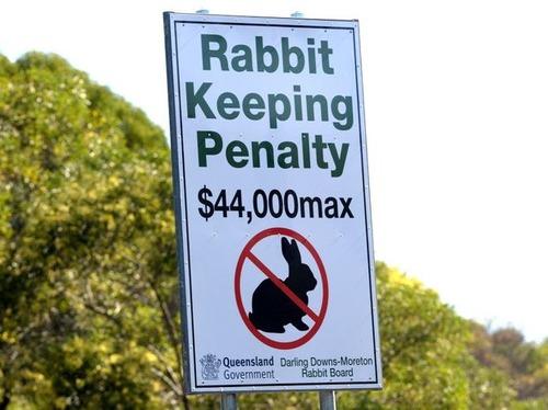オーストラリアでウサギは禁止01