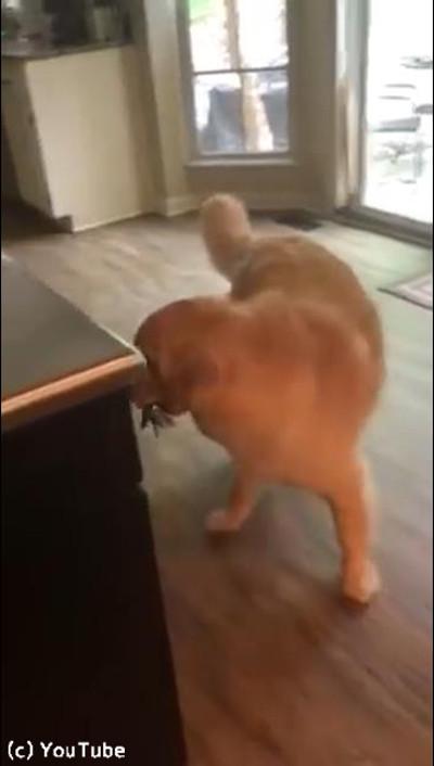 犬「お出かけしないで!」03