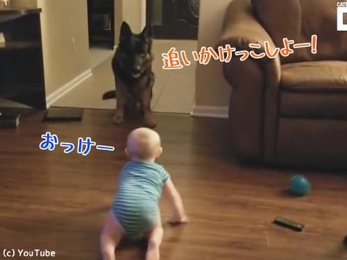 追いかけっこする赤ちゃんと犬00