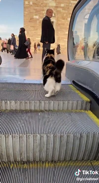 猫、エスカレーターを乗りこなす04