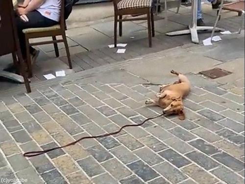 カフェの前から動かない犬00