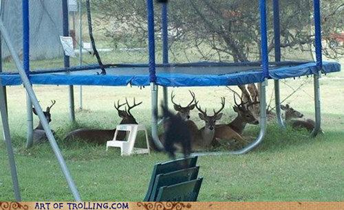 休憩中でリラックス中の動物たち01